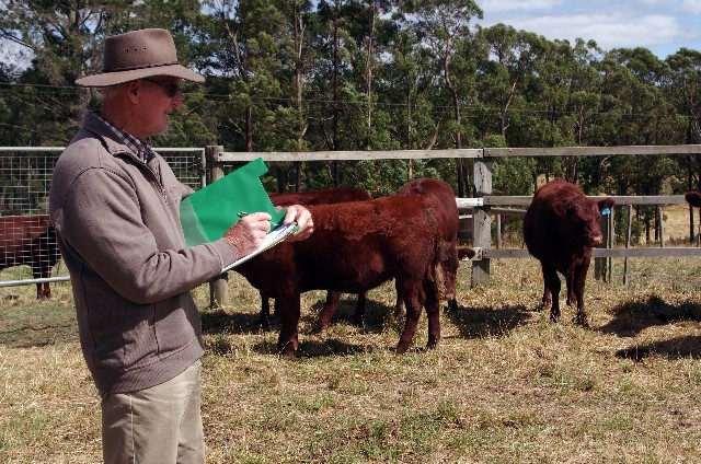 Judge Mr. Dean Afford. Source: Australian Red Poll Cattle Breeders Inc. Victorian Region